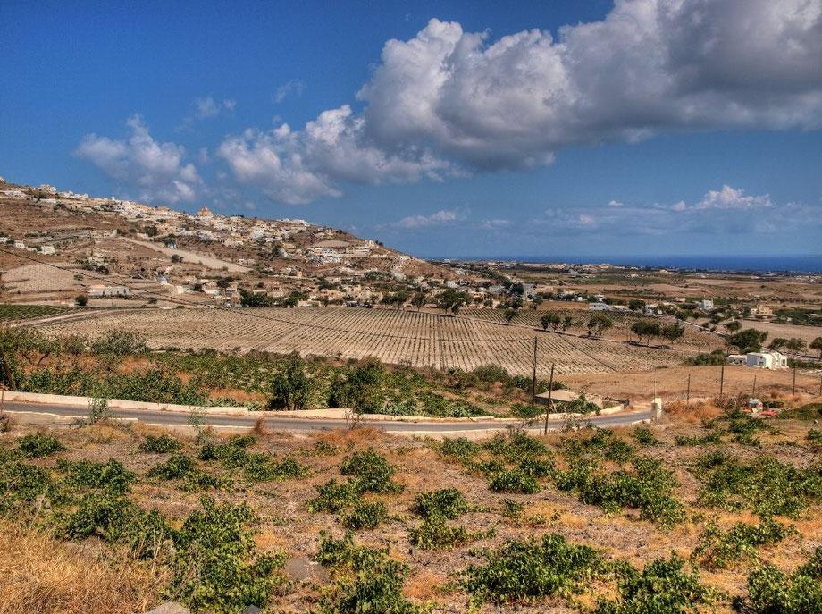 Santorini wineyards II