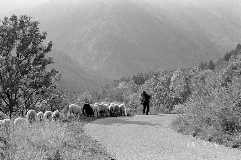 Autunno, Alpi Italiane (With Leica C2 Zoom and Lomography Lady Grey Film)
