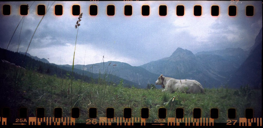 Mucca al Pascolo, Bardonecchia (with Lomography Sprocket Rocket Camera)