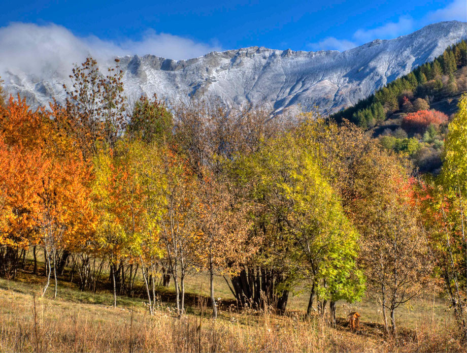 Autumn in The Alps. Valle Rho, Bardonecchia.