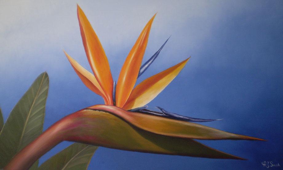 Vogelbek bloem (estrella)