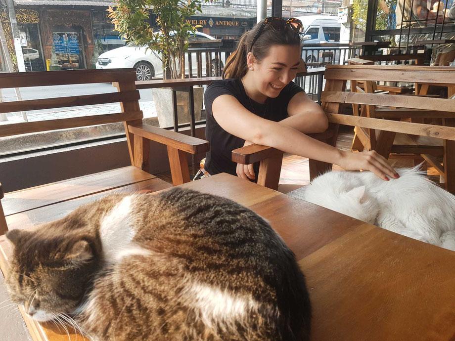 Katzencafé in Chiang Rai