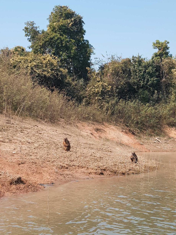 Äffchen auf einer Insel im Nam Ngum Reservoir