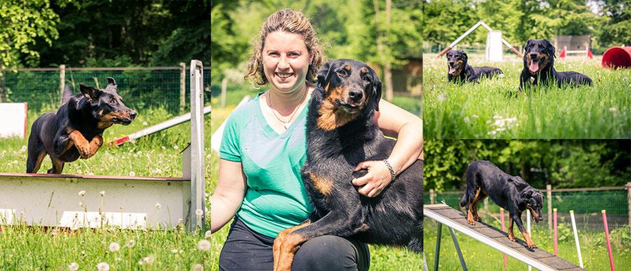 L'Arche-d'Ury élevage  de Beaucerons et éducation canine, pension pour chien 77