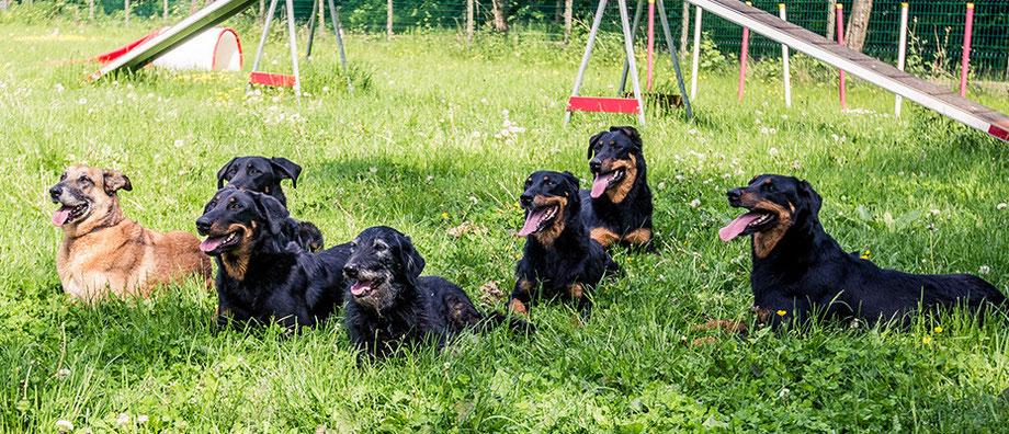 L'Arche-d-rury-éducation-canine-77, pension-pour-chien-77, élevage-de-chien-beauceron