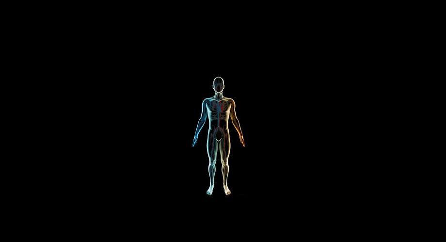 Dein Körper