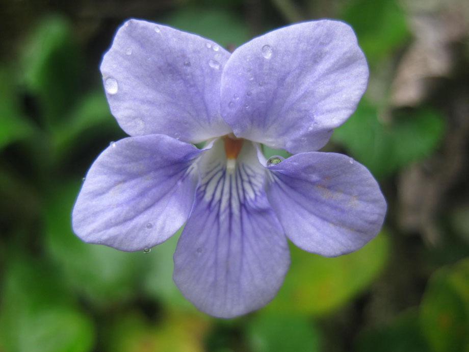 Remember 3.11 2011 Earthquake in Japan Blooming Flower