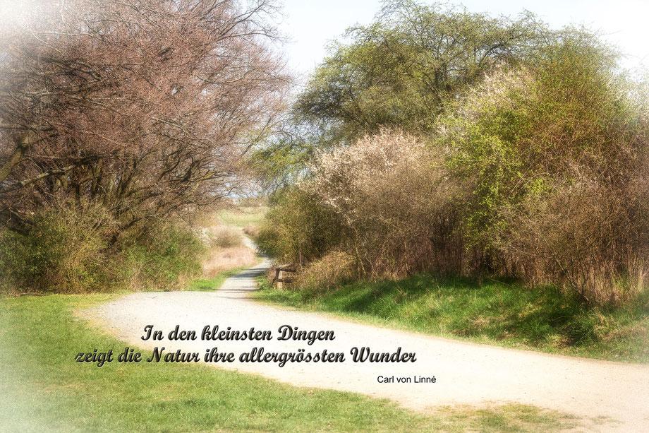 das-erwachen-der-natur-fruehling-vintage-spruchkarte-natur-vignette-weiss