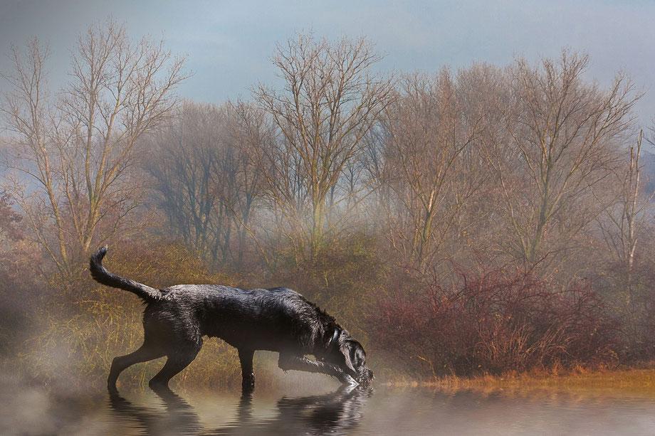 der-faehrte-auf-der-spur-jagd-hund