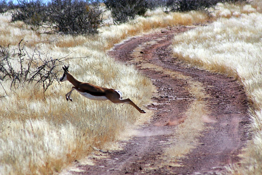 Die Jagd auf in dem offenen Gelände kann manchmal sehr anspruchsvoll sein. Die endlosen Weiten des Südens machen jedoch dieses besondere Stückchen Erde zu einem der interessantes und Landschaftlich schönsten Jagdbebiete in Namibia.