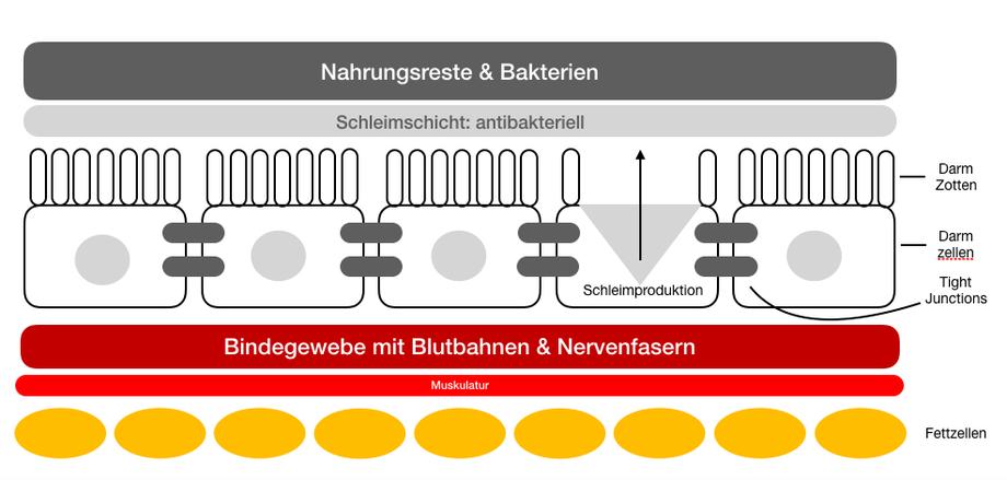 Good Life Getreide: Aufbau der größten Grenze zwischen Außenwelt und Körperinneren: Die Darmbarriere