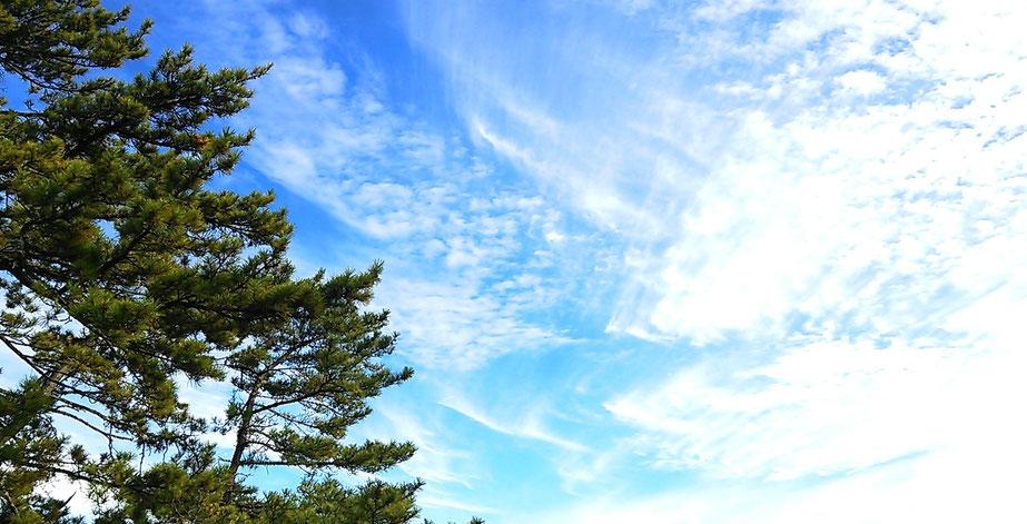 天橋立の松 穏やかな海をわたる 爽やかな風と広い空