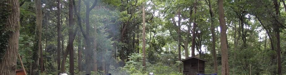 ブリサの森