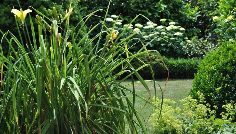 Garten Grün und zartes Gelb