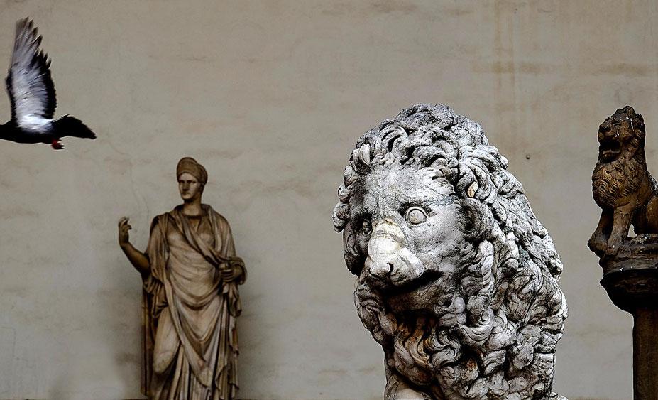 Photographie, Italie, Toscane, Florence, loggia, sculpture, lion, pigeon, art, Renaissance, musée, photographie, art, Mathieu Guillochon