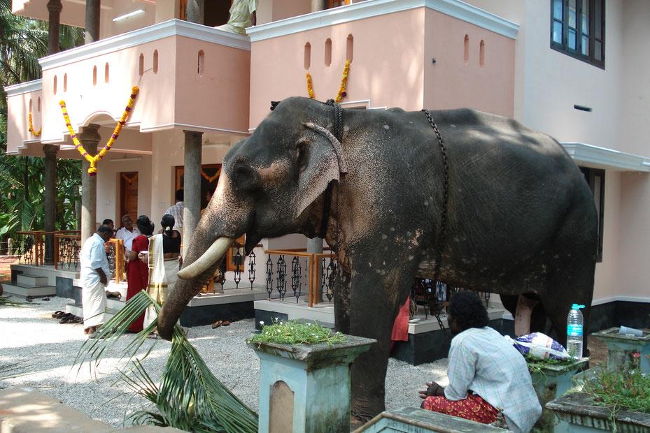 Elefant in Varkala