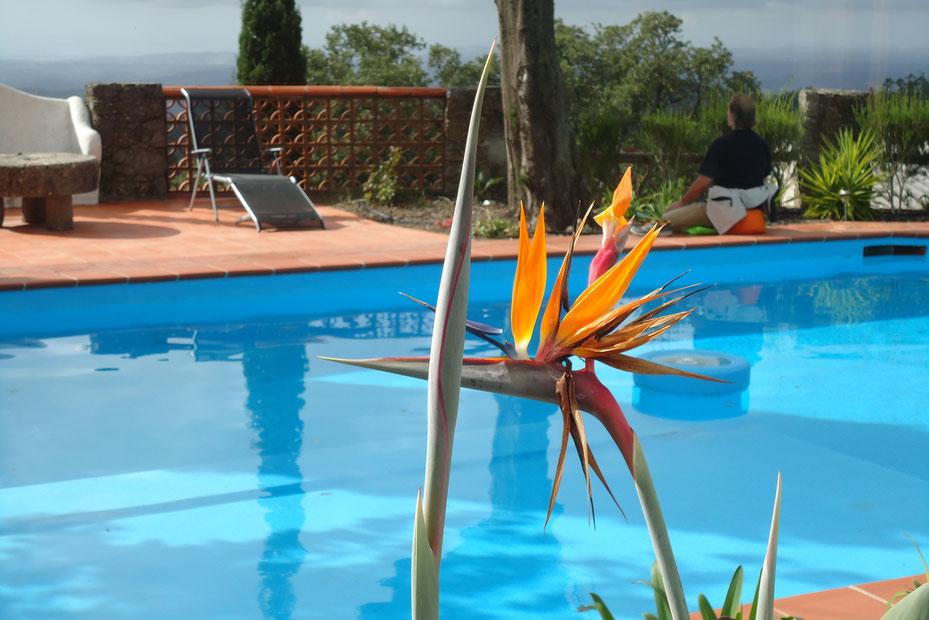 Meditation am Pool der Vila Foia