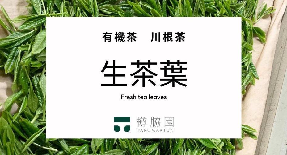 新茶の季節限定、「手摘み」にこだわった希少な有機川根茶の「生茶葉」の予約販売を開始 天ぷら、フレッシュハーブティー、おひたしに