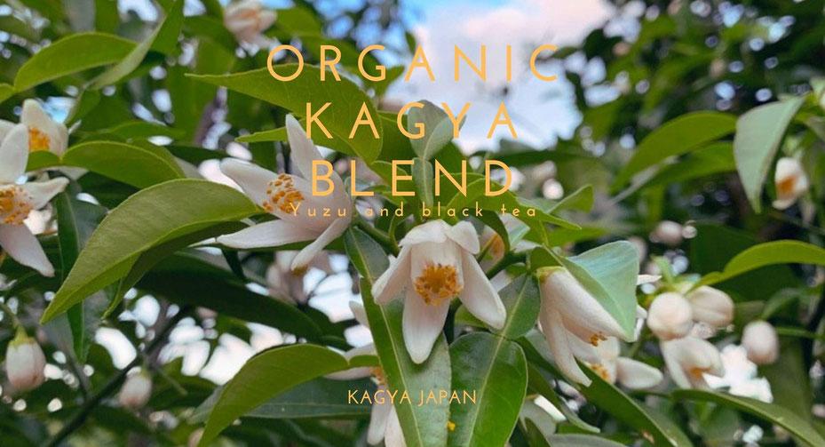 柚子のエッセンシャルオイルブランド『KAGYA JAPAN』から有機柚子と有機紅茶のブレンドティー『オーガニック・カグヤブレンド』を発売