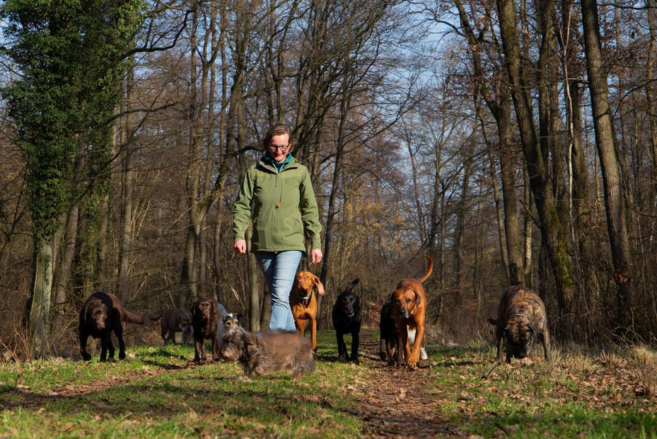 Vivien Buckendahl Dogwalking