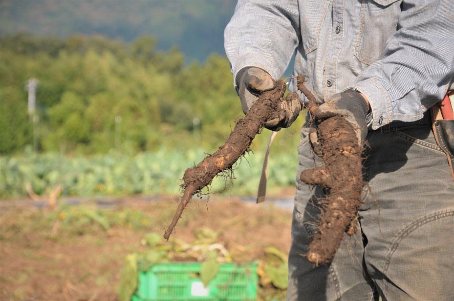 自然栽培 固定種 農業体験 体験農場 野菜作り教室  さとやま農学校 無農薬栽培