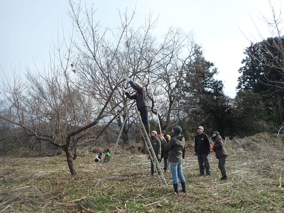 無肥料栽培の果樹。無農薬で自然栽培@すどう農園