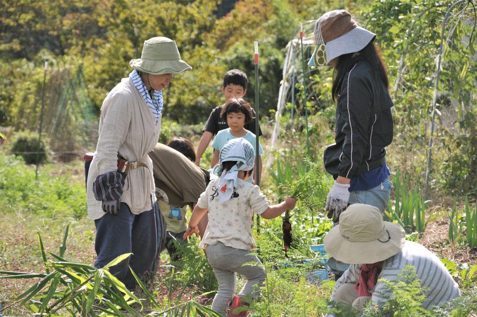 家族で野菜作りから収穫体験まで。種取りもします。さとやま農学校・すどう農園