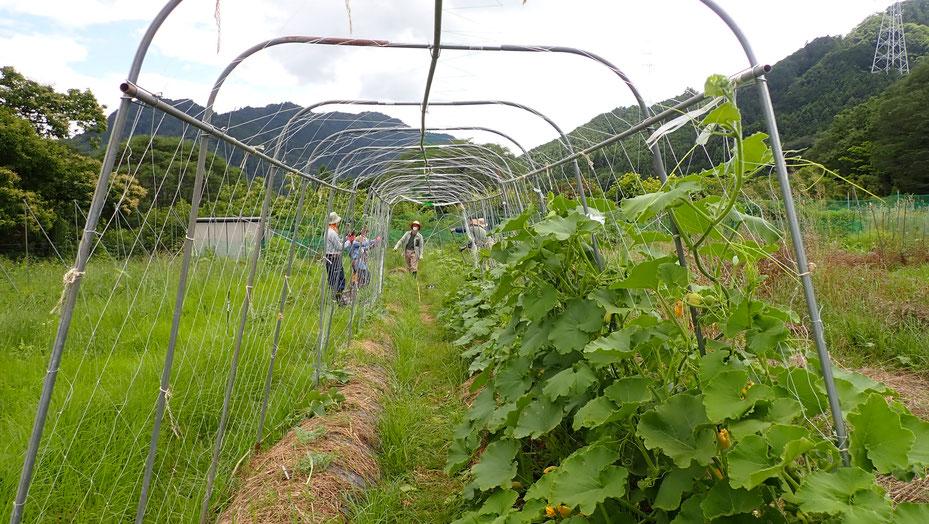 無農薬の野菜づくり教室・さとやま農学校