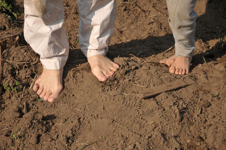 無農薬の畑だから、裸足になると自然にアーシングされていきます。頭の中のノイズが放電されてすっきりします。