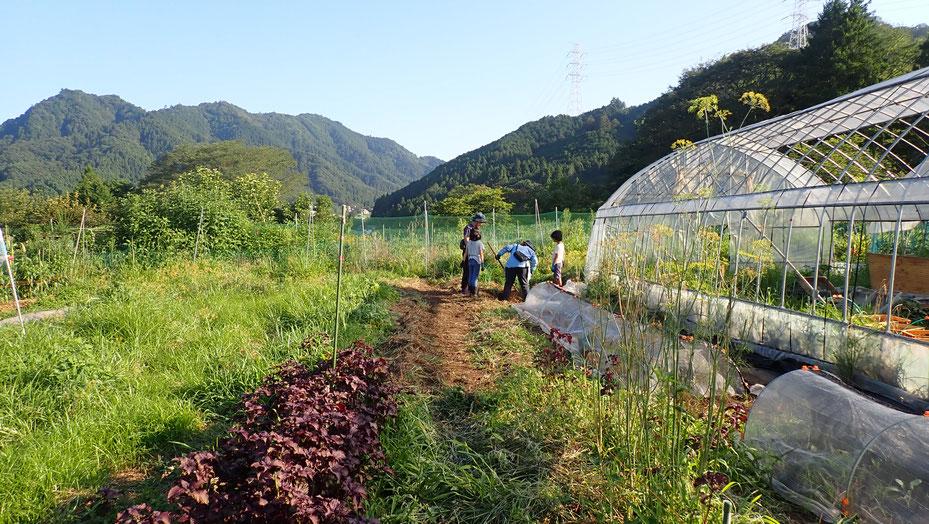 親子で収穫体験・さとやま農学校@すどう農園