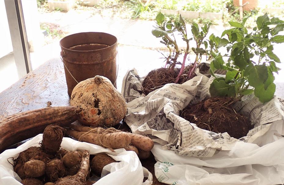 自然農@世田谷ものづくり学校・すどう農園