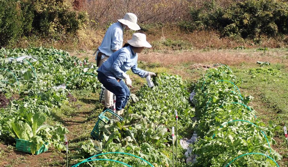 無農薬の野菜作り教室・さとやま農学校@すどう農園