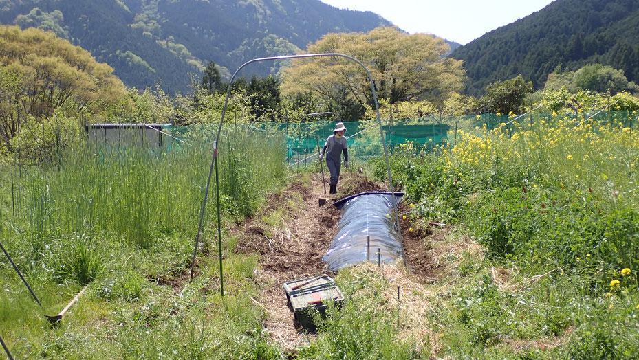 固定種カボチャの自然栽培・さとやま農学校@すどう農園