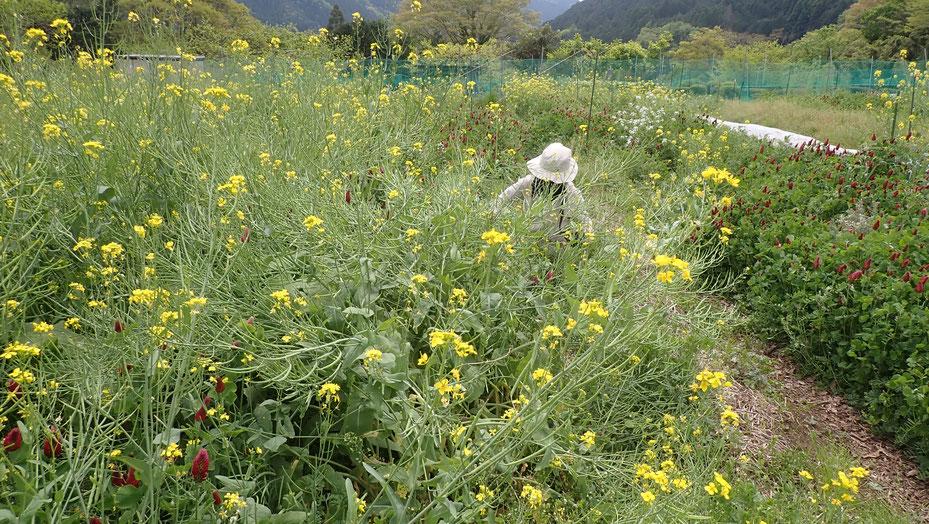 植物が土をはぐくむのが自然農の基本形@さとやま農学校・すどう農園