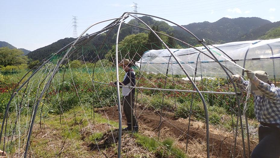 ヤマイモの無農薬栽培を学ぶ@さとやま農学校・すどう農園