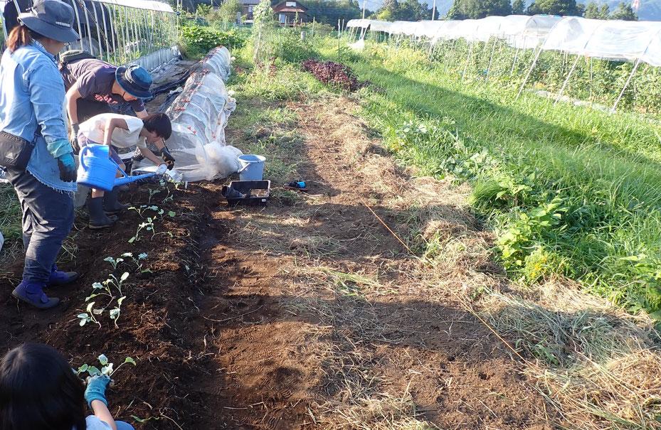 親子で農業体験・さとやま農学校@すどう農園