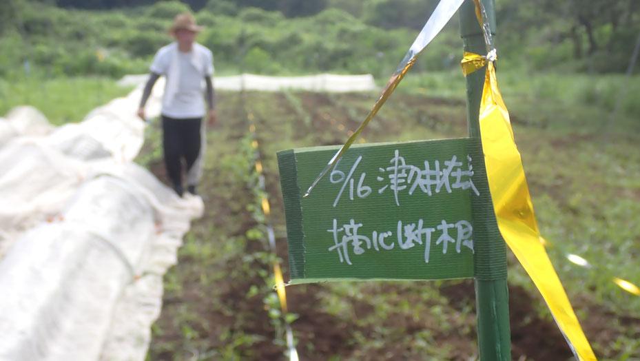 在来大豆を無農薬栽培する@さとやま農学校