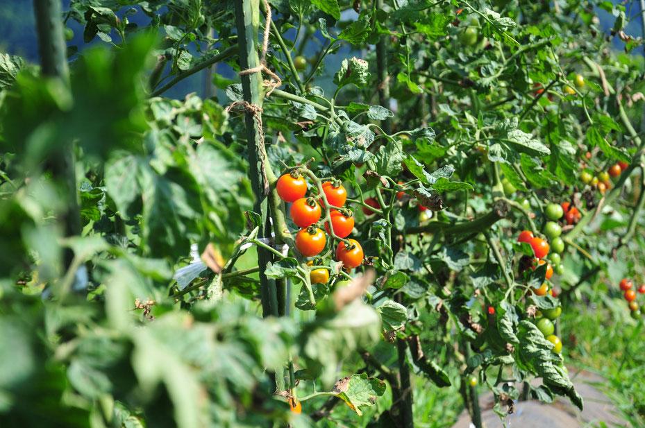 自給のための自然農を学ぶ@さとやま農学校・すどう農園