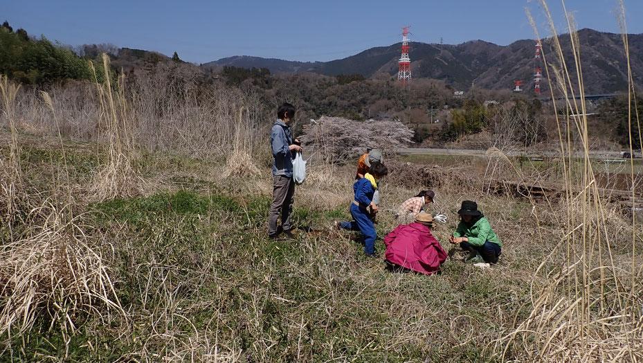 無農薬のヨモギの収穫体験@さとやま農学校・すどう農園