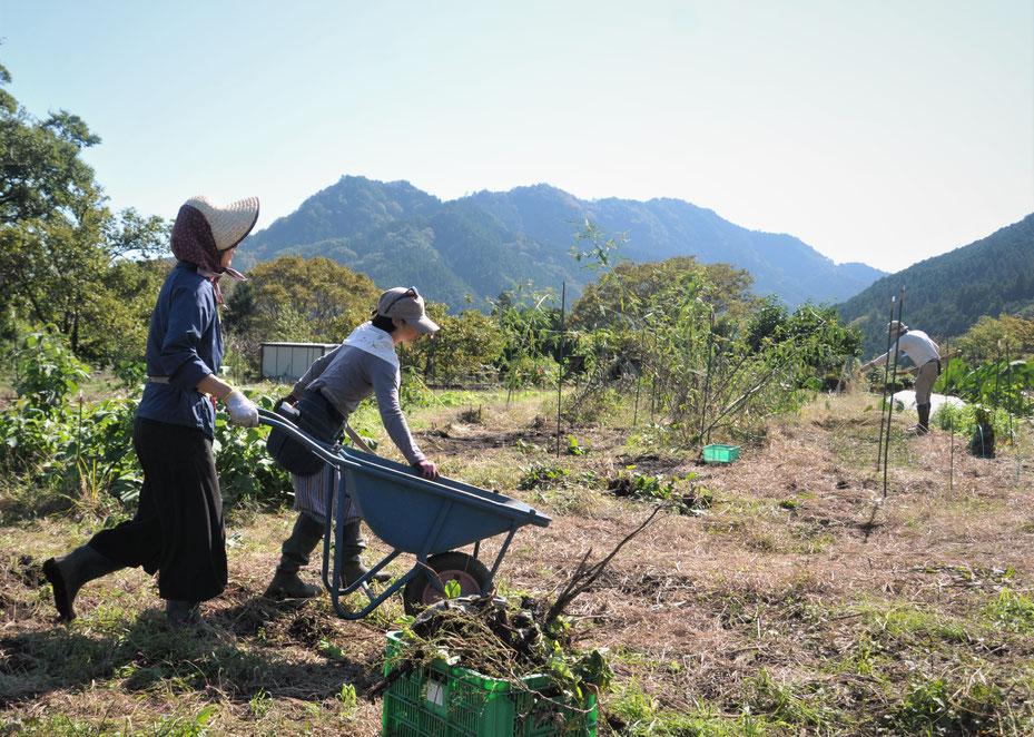 自然栽培 固定種 農業体験 体験農場 野菜作り教室  さとやま農学校