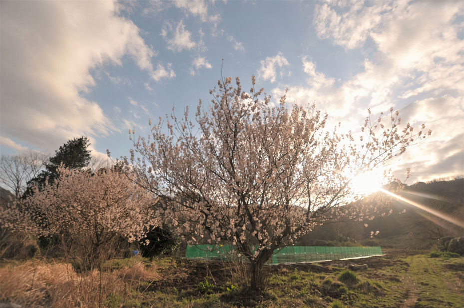 首都圏から日帰りの農業体験「さとやま農学校」の畑の一部です。