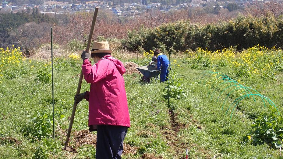 自然農の野菜づくり体験教室・さとやま農学校@すどう農園
