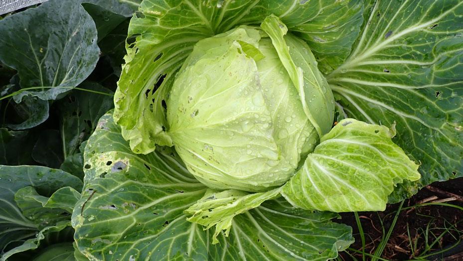 自然農の野菜作り教室@さとやま農学校・すどう農園