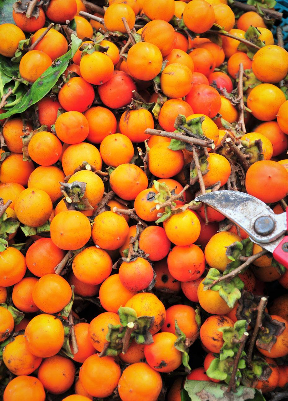 今は甘柿がほとんどなので、無農薬栽培の渋柿は貴重です。