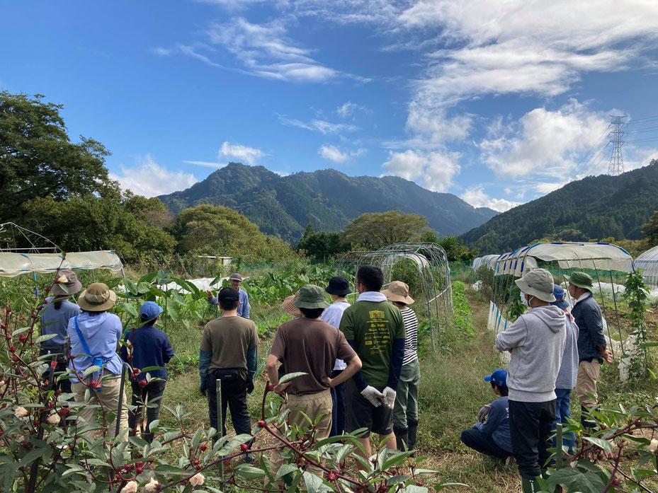 自給のための自然農を学ぶ体験農園@さとやま農学校・すどう農園