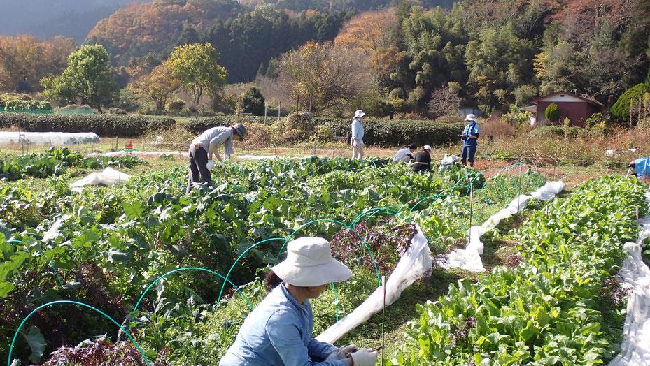 自給のための野菜づくり教室・さとやま農学校ショートコース