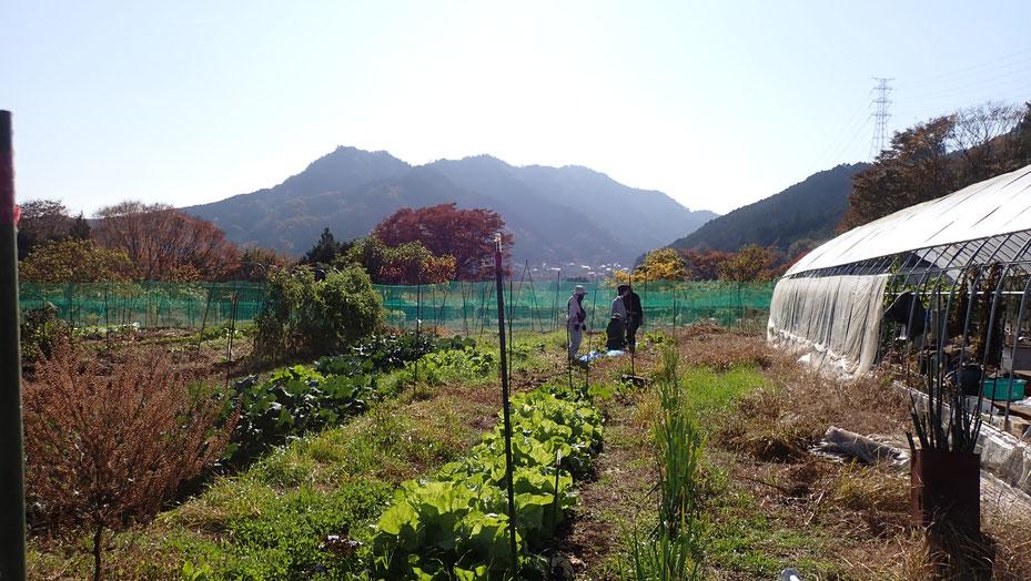 無農薬栽培の津久井在来大豆の栽培と収穫@さとやま農学校