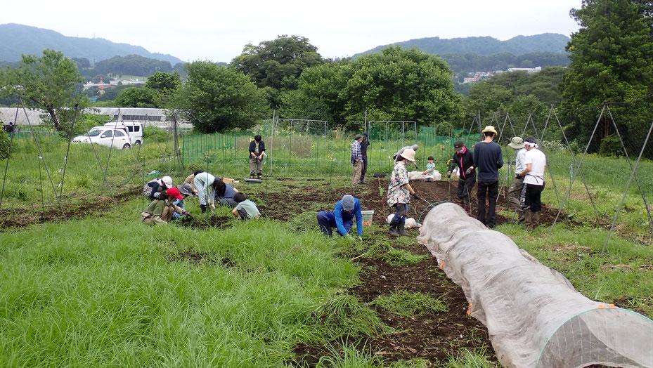 無農薬で在来大豆の栽培・さとやま農学校@すどう農園