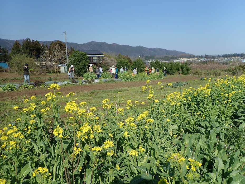 自然栽培でアーシング。裸足の季節です。首都圏から日帰りの農業体験@さとやま農学校