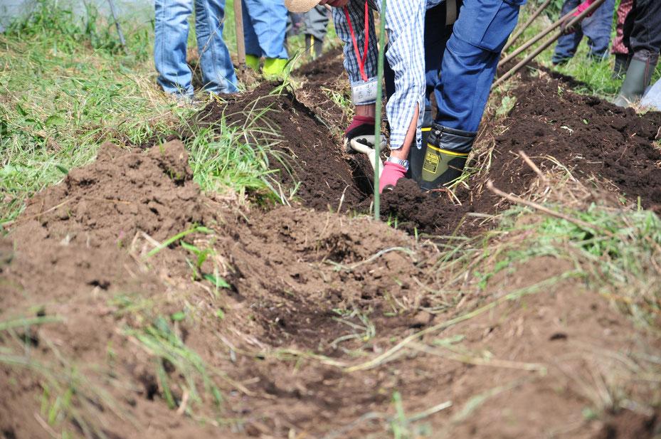 桑やスコップで掘り進めます。